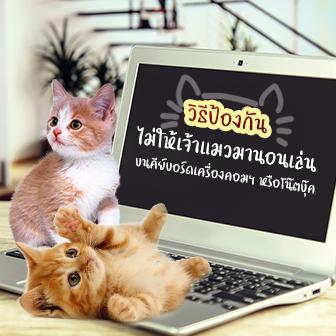 วิธีป้องกันไม่ให้เจ้าแมว มานอนเล่นบนคีย์บอร์ดเครื่องคอมฯ หรือโน๊ตบุ๊ค