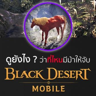 อยากผสมม้าในเกม Black Desert Mobile แต่ไม่รู้จะจับม้าที่ไหน? เชิญทางนี้